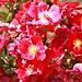 Back Door Roses by Lynn English