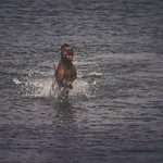 20180617-171512 - Water Dog