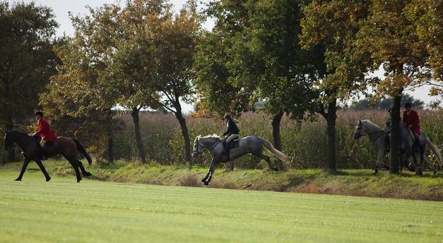 Midland Hunt Landhorst 2015-9101
