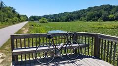 Bumpy Oak Pond