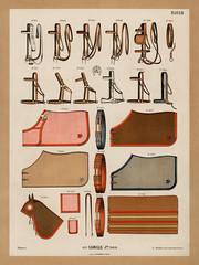 A chromolithograph of horseback riding equipments design showcase from an antique horseback riding catalog (1890). Digitally enhanced from our own original plate.