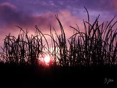 Evening in the Grassland