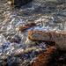 <p><a href=&quot;http://www.flickr.com/people/110775021@N02/&quot;>hpilot11</a> posted a photo:</p>&#xA;&#xA;<p><a href=&quot;http://www.flickr.com/photos/110775021@N02/42903703601/&quot; title=&quot;On The Rocks&quot;><img src=&quot;http://farm2.staticflickr.com/1790/42903703601_55c4711d58_m.jpg&quot; width=&quot;240&quot; height=&quot;135&quot; alt=&quot;On The Rocks&quot; /></a></p>&#xA;&#xA;
