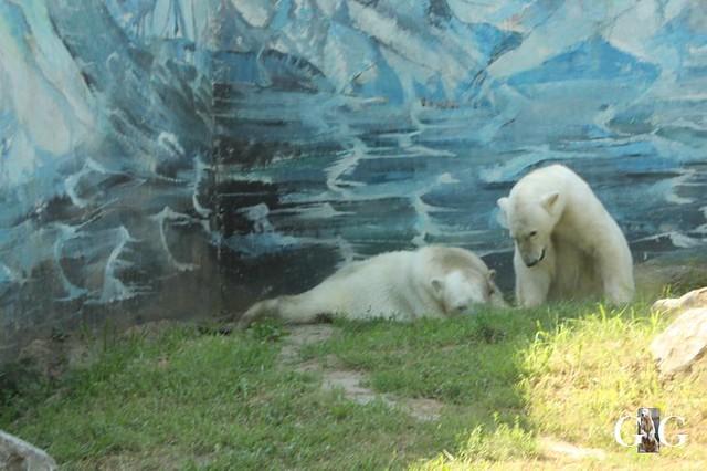 Besuch Zoo Sosto 20.06.+21.06.201871