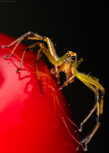 Unknown Spider..., Nikon D500, AF Micro-Nikkor 200mm f/4D IF-ED