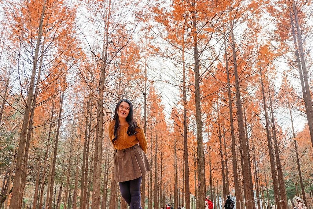 autumn_korea_nami_island