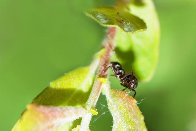 Cute Little Ant Butt