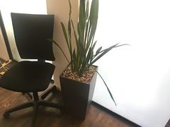 Green Office II
