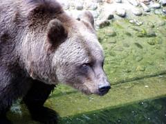 Münchener Zoo - Hellabrunn (2005)