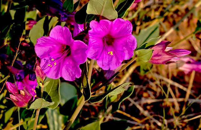 Wild-Flower-23-7D1-080918