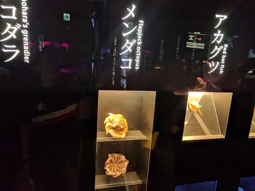 メンダコの展示