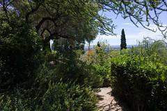 0020 Parc Saint-Bernard (Hyères) - Photo of Hyères