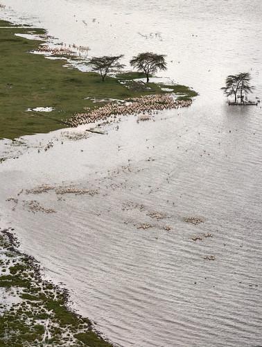 africa lakenakuru panorama kenya