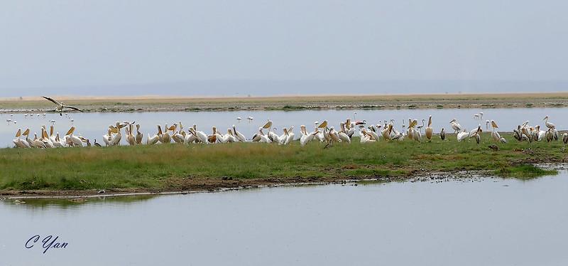 Kenya-Tanzania (Bird 2)