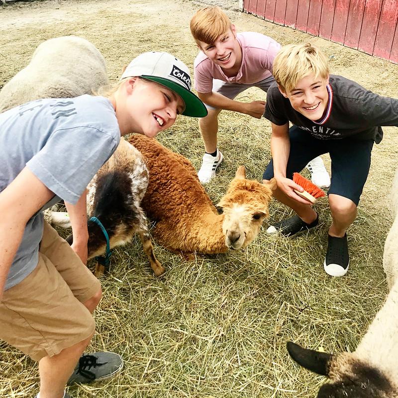 lambsfarm-0818h