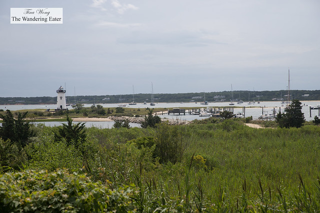 Scene from walking Edgartown to the Lighthouse Beach