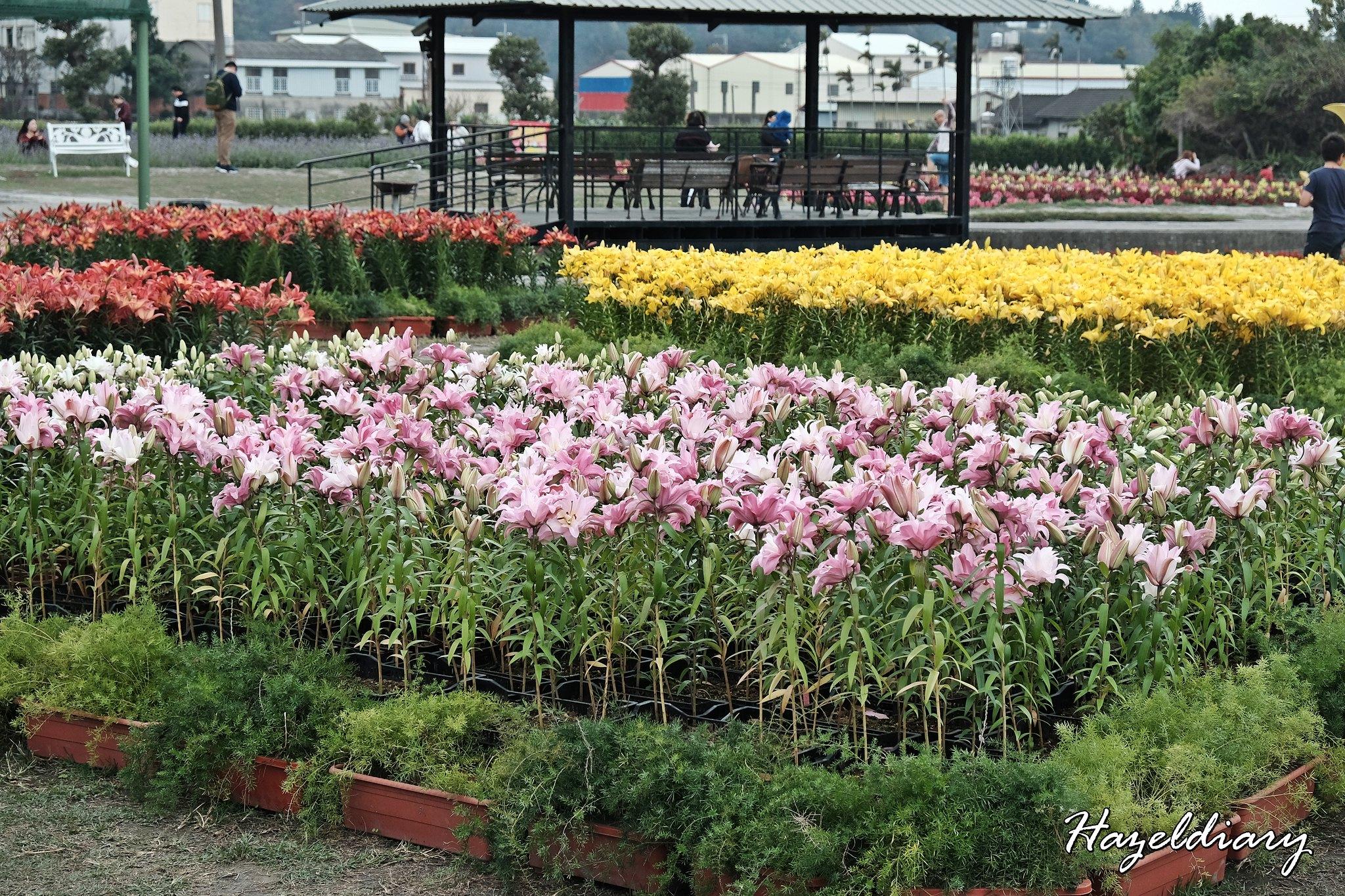 Zhong She Guan Guang Flower Market Taichung Taiwan-4