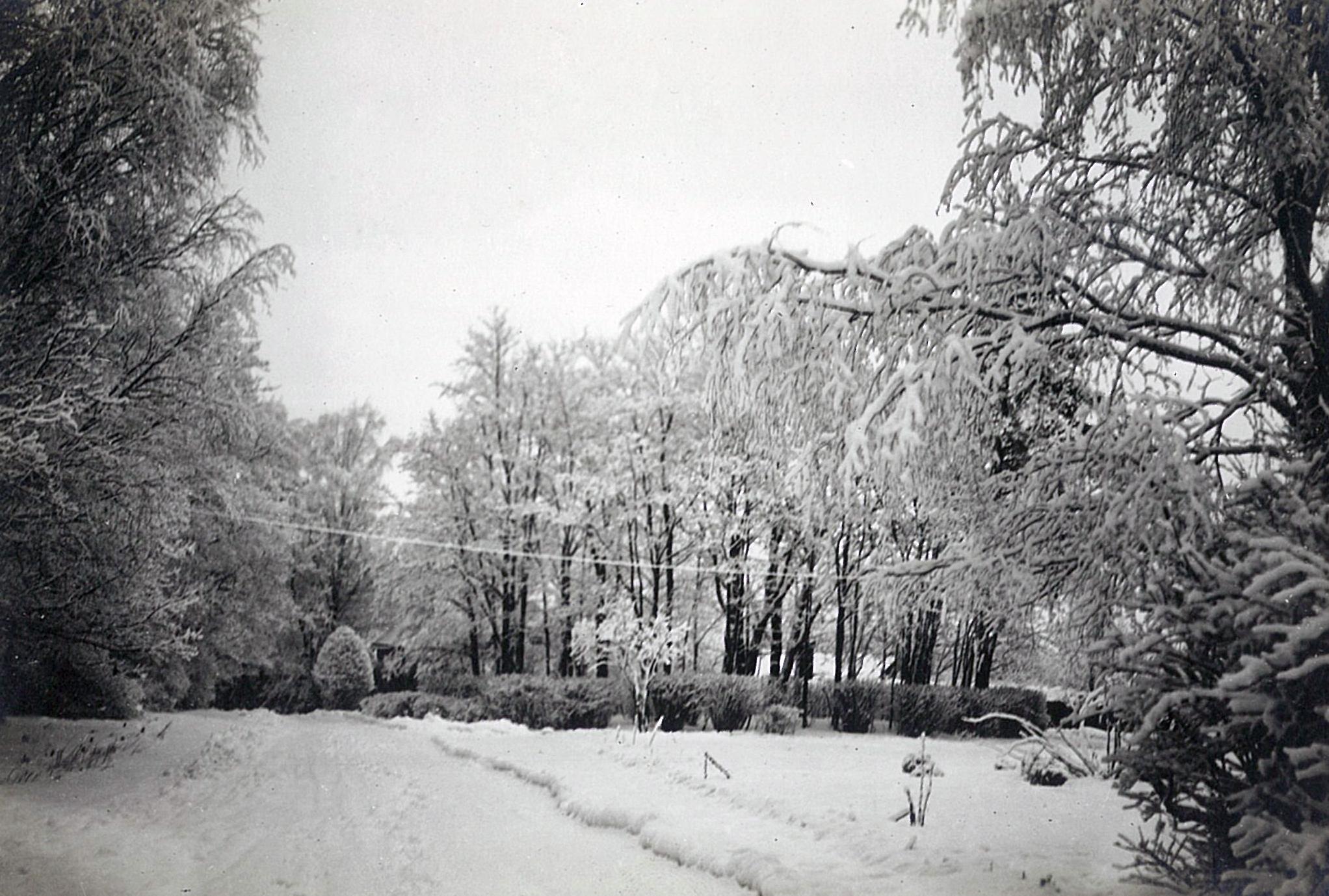 Зимний парк в Рябово