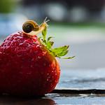 snailberrylicious