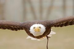 Bois des aigles