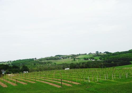wino 064 (1)