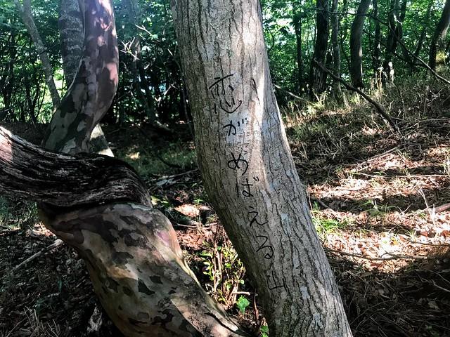 鎗ヶ先 寺本ルート 稜線 「恋がめばえる山」