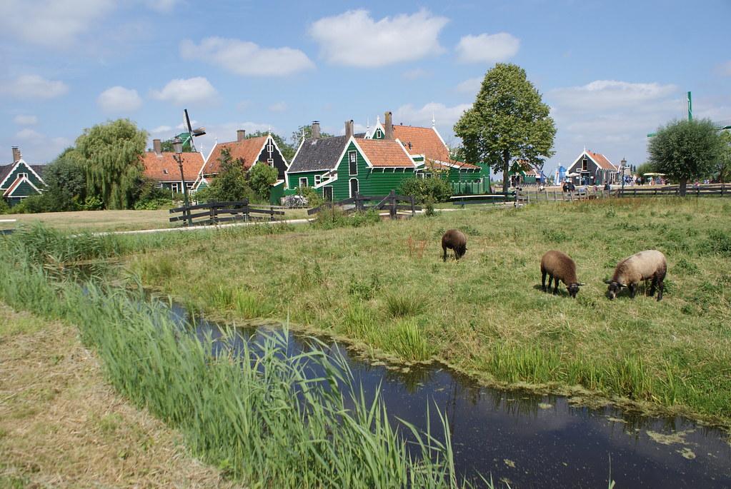 Vous avez tout : Moulin, maisons, moutons, polders, canaux. Reste plus qu'à prendre la photo.