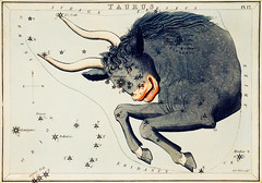 Sidney Hall's (?-1831) astronomical chart illustration of the Taurus. Original from Library of Congress. Digitally enhanced by rawpixel.