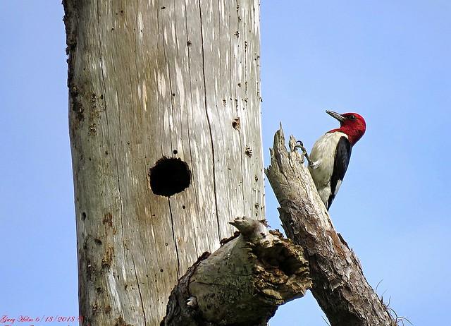 An Unmistakable Bird