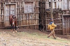 horse and boy. 말과 소년