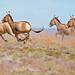 Happy 10th Anniversary TNC Mongolia by JKIESECKER