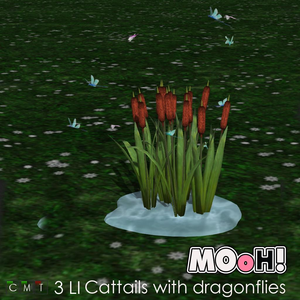 MOoH! Cattails with dragonflies