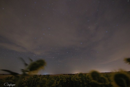 Girasoles sobre un cielo estrellado...
