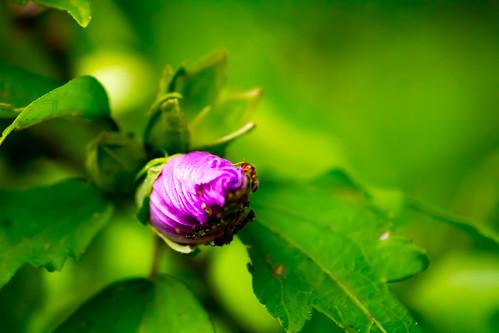 bouton de fleur