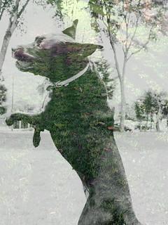 miAH em verde