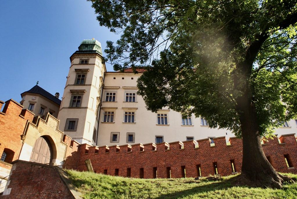 Bel arbre au pied des remparts du chateau de Wawel à Cracovie.