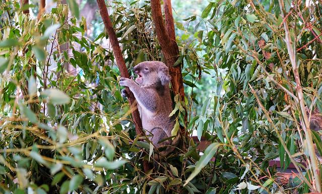 Our Favorite Wildlife Encounters In Australia