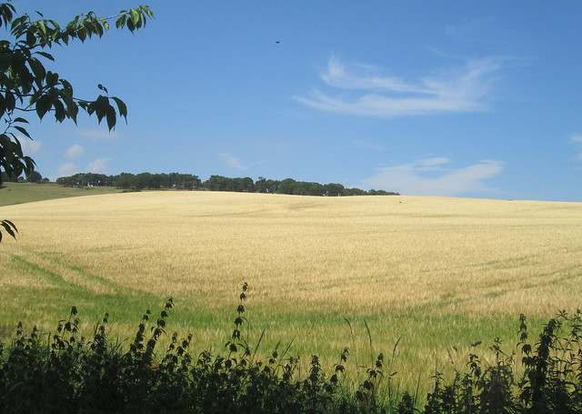 countryside at Collessie, Fife