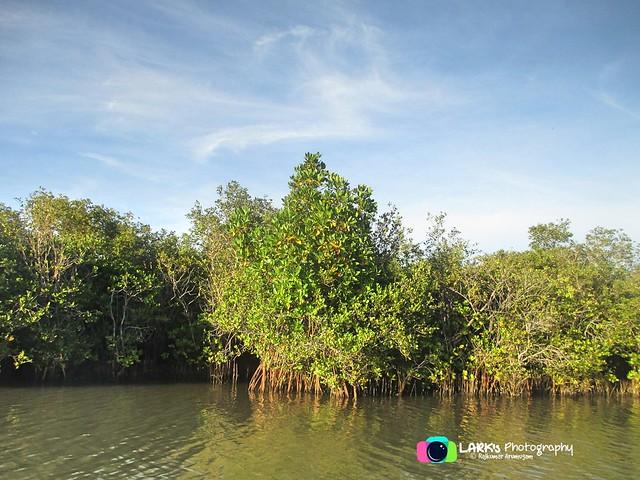 Pichavaram Mangrove Forest