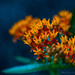 mildweed flowers by The Gaggle Photography | Jessica Nelson