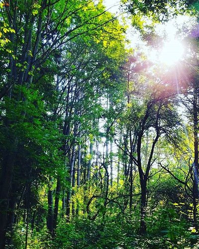 In the woods at Hunters Creek Park #hunterscreekpark #wny #eastaurora #nature #hiking #trees