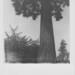 2018-06-24-NymansGardensNT Polaroid SLR690, expired Polaroid 600 Colour film