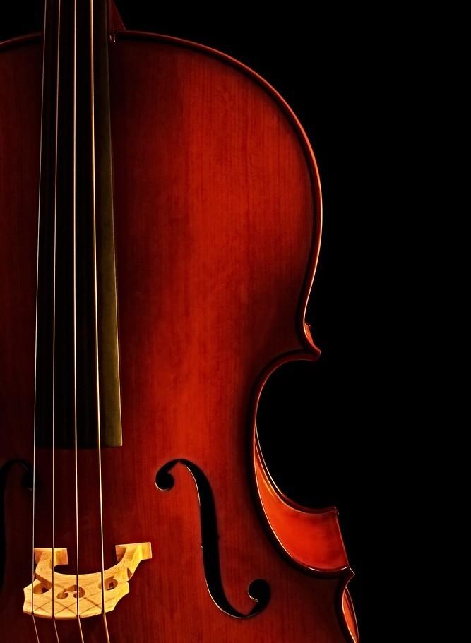 close up photo of cello body