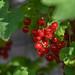 Red vitamines by powerfocusfotografie