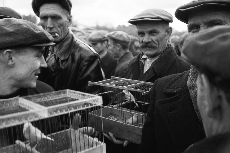 Калитниковский птичий рынок