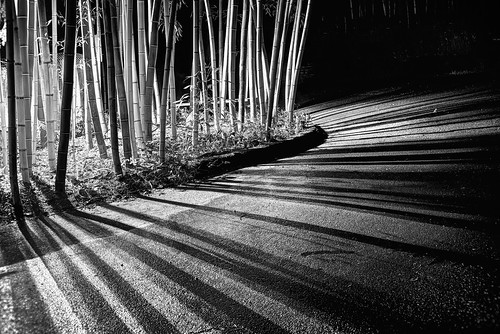 saratoga california siliconvalley sanfranciscobay sanfranciscobayarea southbay hakonegardens japanesegarden garden park bamboo bambooforest forest lines wood tree road light lightsandshadows shadow night monochrome blackandwhite sony a7 a7ii a7mii alpha7mii ilce7m2 fullframe vintagelens dreamlens canon50mmf095 canon 1xp raw photomatix hdr qualityhdr qualityhdrphotography fav200