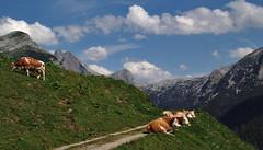 on the alp - auf der Alm