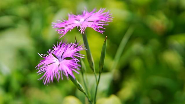 湿生花園DSC09916-01