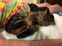 Gabby - such a snuggler