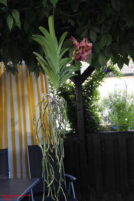 Orchideen-Neuzugang 2 - Seite 5 43765976721_291129873f_c